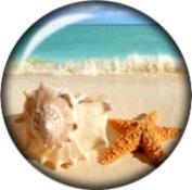 Snap button Beach Sea starfish Conch Shell 18mm Cabochon chunk charm