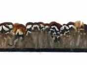 Pheasant Feathers, Natural Brown Venery Pheasant Plumage Feather Trim, 1 Yard