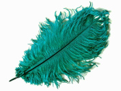 10 Pieces - 36cm - 43cm TEAL GREEN Ostrich Dyed Drab Body Feathers