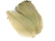 Skeleton Leaves 15cm 100 pcs Natural Rubber Leaves Flower Making Floral Scrapbook Craft Wedding Card