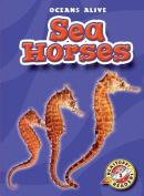 Sea Horses (Oceans Alive)
