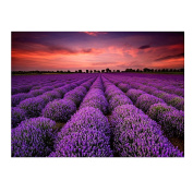 Blxecky 5D DIY Diamond Painting By Number Kits,lavender(16X12inch/40X30cm)