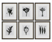 Botany Specimen Prints, S/6
