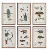 Multi Insect Prints, S/6