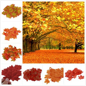 SunAngel Package of Approximately 400 Assorted Rich Fall Coloured Silk Maple Leaves for Weddings, Events and Decorating