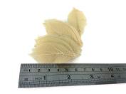Skeleton Leaves 2.5cm 100 pcs Natural Rubber Leaves Flower Making Floral Scrapbook Craft Wedding Card