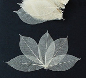 100 Mini Skeleton Leaves Rubber Tree Natural colour Scrapbook Craft Card Wedding
