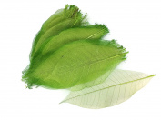 Light Green Skeleton Small Leaves 15cm Natural Colour Flower Making Natural Rubber Leaves
