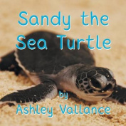 Sandy the Sea Turtle