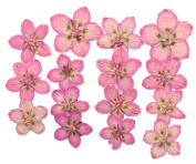 Pressed flowers, marsh grass of Parnassus, pink. Art craft materials, scrapbooking, card making, home decoration