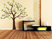 Rainbow Fox Large Green Tree Wall Sticker Decals PVC Removable Wall Decal for Nursery Girls and Boys Children's Bedroom