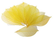 50x yellow Natural Skeleton Leaves Rubber Tree Scrapbook Craft Wedding Decor