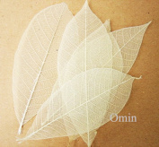 Omin Brand Natural Rubber Tree Skeleton Leaves Decorative DIY Craft Leaf Kits size 3.5 - 10cm Height Approx Pack of 200
