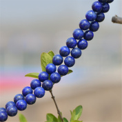 Enhanced Natural Lapis Lazuli Beads 6mm-14mm Smooth Polished Round 15 Inch Strand LL05