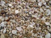 BULK 1.8kg Tiny Size Indian Ocean Shell Mix Seashells Shellcraft Nautical Decor