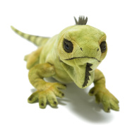 Hamleys Iggy Iguana Soft Toy