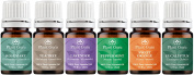 Essential Oil Variety Set Kit - 6 Pack - 100% Pure Therapeutic Grade 5 ml. Set includes-