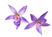 2 x Large Purple Orchid Flower Hair Pins Vtg Rockabilly Beach Clip 1950s 1322 *EXCLUSIVELY SOLD BY STARCROSSED BEAUTY*