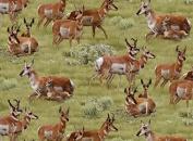 Pronghorn Antelope On The Range North American Wildlife Green