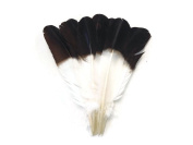 """Moonlight Feather, Imitation Eagle Feathers - White Tom Turkey Rounds """"Eagle"""" Brown Tipped Feathers - 0.1kg"""