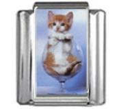 KITTEN IN WINE GLASS Photo Italian Charm 9mm Link - 1 x CA030 Single Bracelet Link