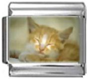 KITTEN GINGER WHITE Photo Italian Charm 9mm Link - 1 x CA107 Single Bracelet Link