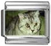 CAT GREY WHITE Photo Italian Charm 9mm Link - 1 x CA119 Single Bracelet Link