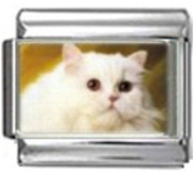 CAT WHITE FLUFFY Photo Italian Charm 9mm Link - 1 x CA017 Single Bracelet Link