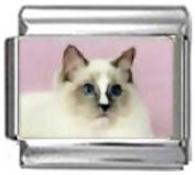 CAT GREY WHITE Photo Italian Charm 9mm Link - 1 x CA117 Single Bracelet Link
