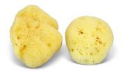 Premium Natural Fina Sea Silk Sponges from the Mediterranean