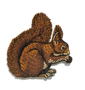 Squirrel Wild Animal Baby Kid DIY Embroidered Sew Iron on Patch