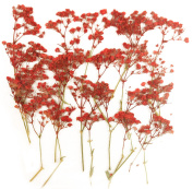 Pressed flowers, red baby breath 20 pieces, for art craft card making scrapbooking