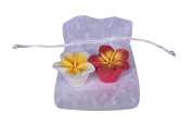 Lovely Hula Hands Lip Gloss Bundle of 2 - Pink and White Plumeria