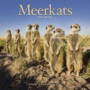 Meerkats Calendar 2018