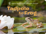 Tadpole to Frog [Board Book]