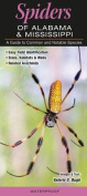 Spiders of Alabama & Mississippi  : A Guide to Common & Notable Species
