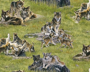 Wolf Family In The Meadow North American Wildlife 5018-Green
