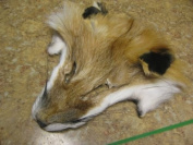 Red Fox Face Scrap Hide Tanned Fur Pelt