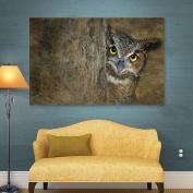 Antonio Raggio's Peeping Owl, Gallery Wrapped Canvas 16X24