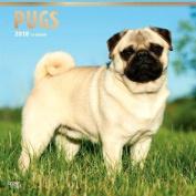 2018 Pugs Wall Calendar