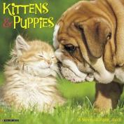 Kittens & Puppies 2018 Wall Calendar