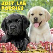 Just Lab Puppies 2018 Wall Calendar