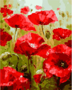 JynXos Diy Oil Painting by Numbers, Paint by Number Kits - Red Poppy Flower 4110cm - PBN Kit for Adults Girls Kids Christmas New Year Decoration Gifts