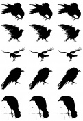 Murder of Crows 2.5cm - Black 17CC821 Fused Glass Decals