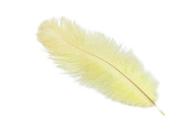 24 Pieces Ostrich Feather Plumes 15cm - 20cm Long - 17 Colours Available