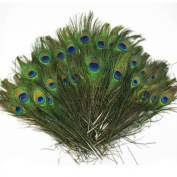 Fangfang 20 Pcs Natural Peacock Feathers With Eyes 10-100cm