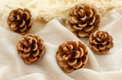 15-Piece Real Natural Dried Pine Cones for Potpourri, Bowl Fillers, and Crafting£¬Unscented