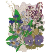 Pressed flowers mixed pack in blue collection, lobelia, borage, forge me not, pansy, alyssum, shamrock, foliage