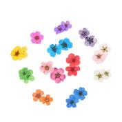 Noxus Bros 12 Colour Real Dry Dried Flower for 3D UV Gel Acrylic False Tips Nail Art Salon