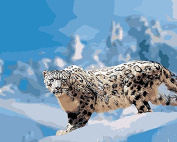 Arts Language Wooden Framed 41cm x 50cm Paint by Numbers Diy Painting -Snow leopard